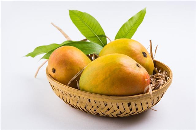 Alphonso Yellow Mango