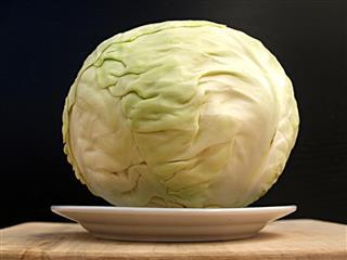 Cabbage -like globe