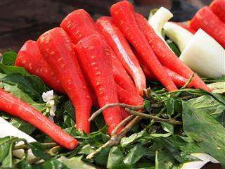 Indian carrot