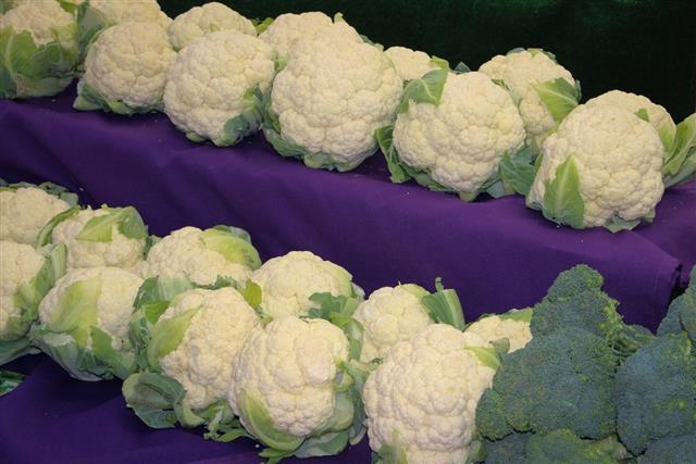 Lots of Cauliflower