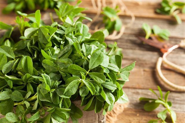 Raw Organic Fenugreek Leaves