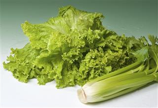 Fresh lettuce and celery