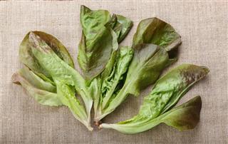 Lettuce leaves bunch