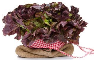 Oak leaf lettuce on a burlap bag