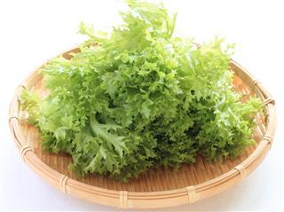 Japanese lettuce