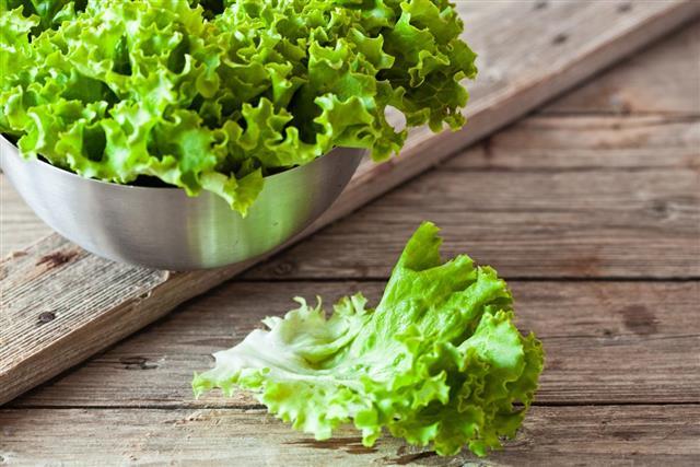 Lettuce salad in metal bowl