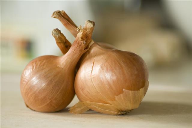 Shallots,Onion Family