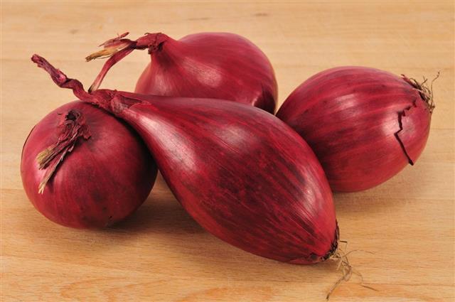 Four Onion