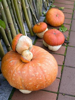 Mushroom shape pumpkins