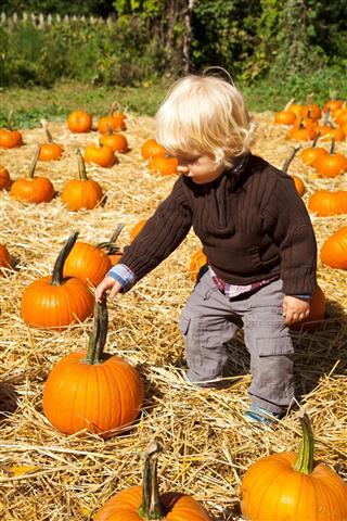 Baby boy picking up pumpkins