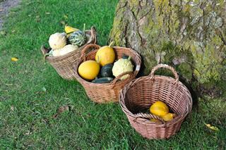 Three baskets of pumpkins
