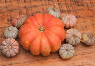 Pumpkin from farm