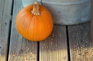 Pumpkin and Sprinkles