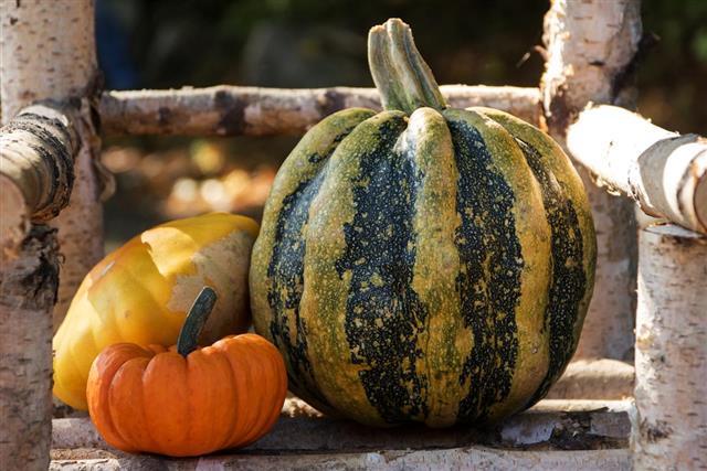 Three pumpkins as autumn decoration in the garden