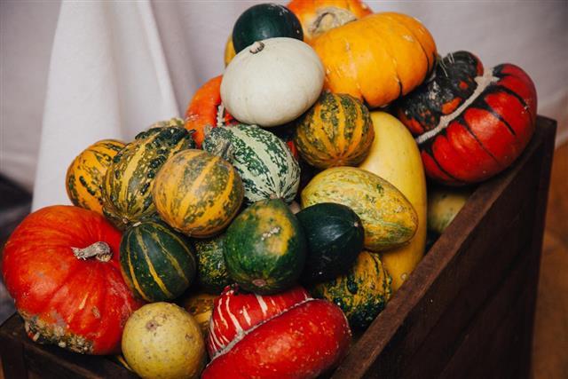 Autumn pumpkins vegetable collection as halloween background