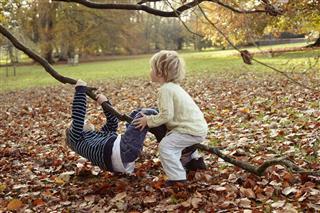 Boys Playing On Tree