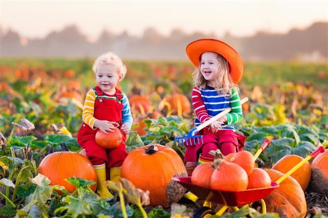Kids Picking Pumpkins
