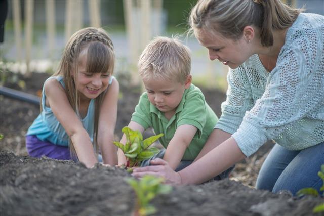 Planting Swiss Chard In Garden