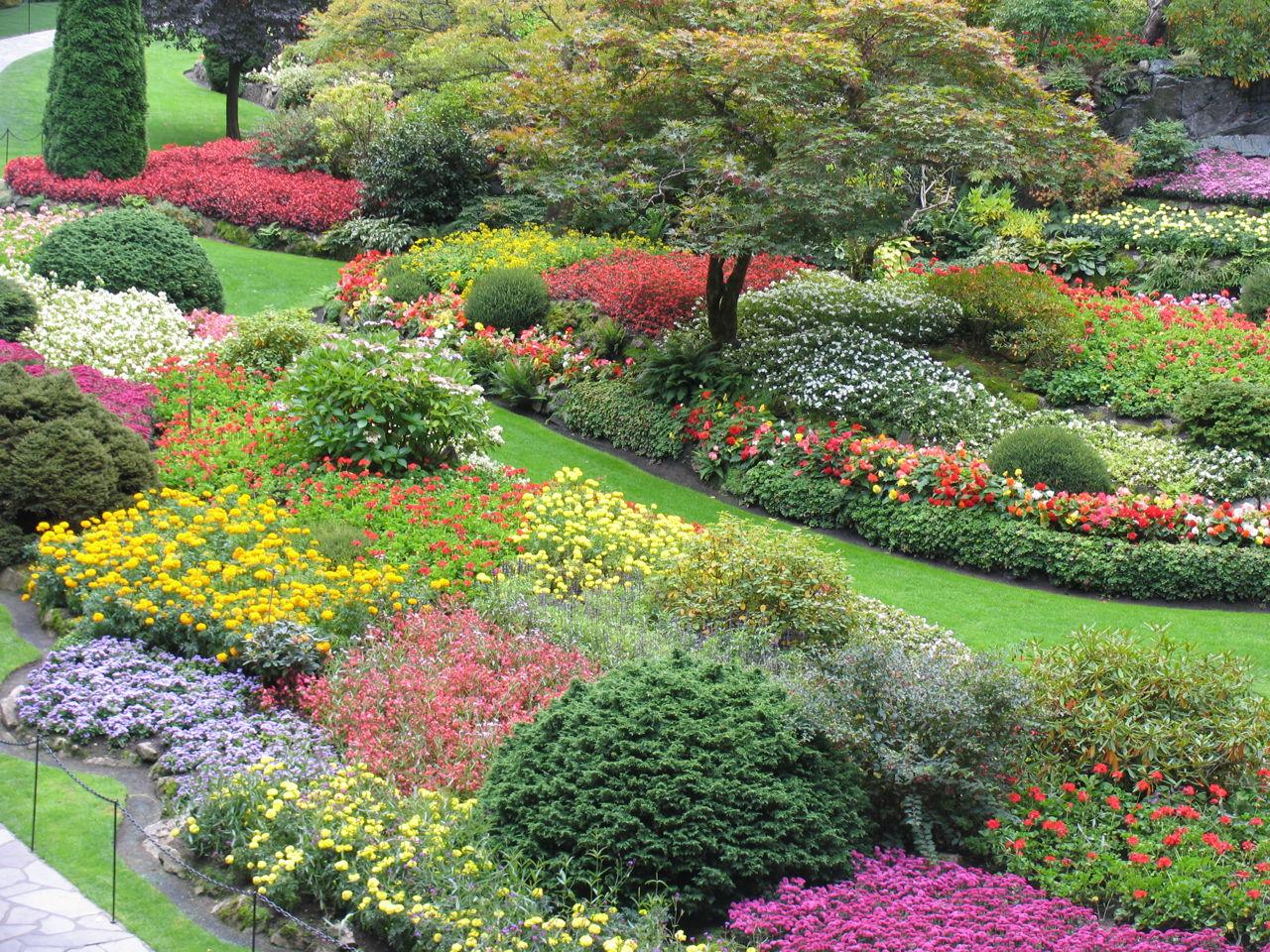 Fab Tips On Shrub Identification Evergreen And Flowering Shrubs