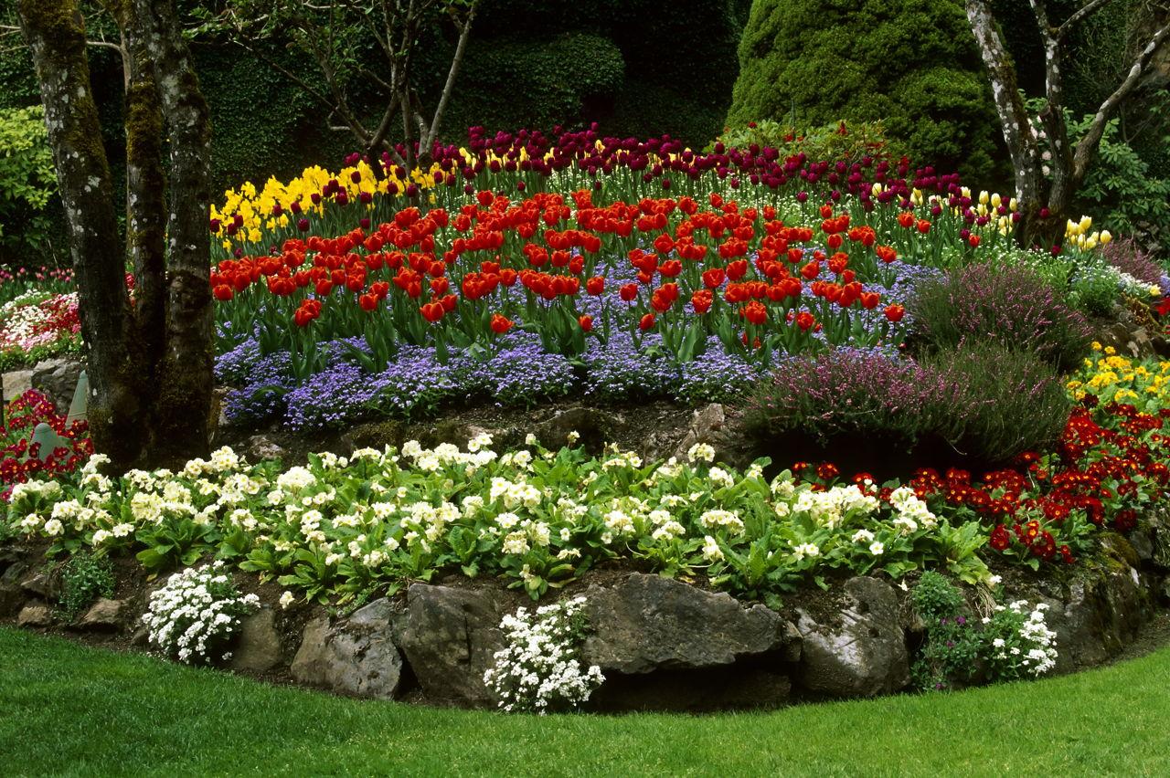 White flowering shrubs butchart garden tulip flower landscaping victoria mightylinksfo