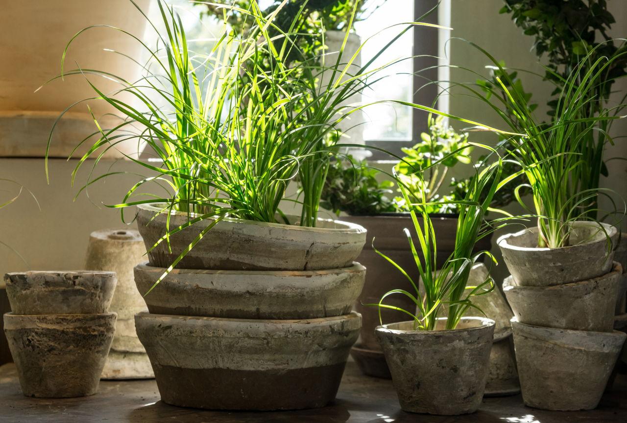 Flowering Plants Vs Non Flowering Plants Gardenerdy