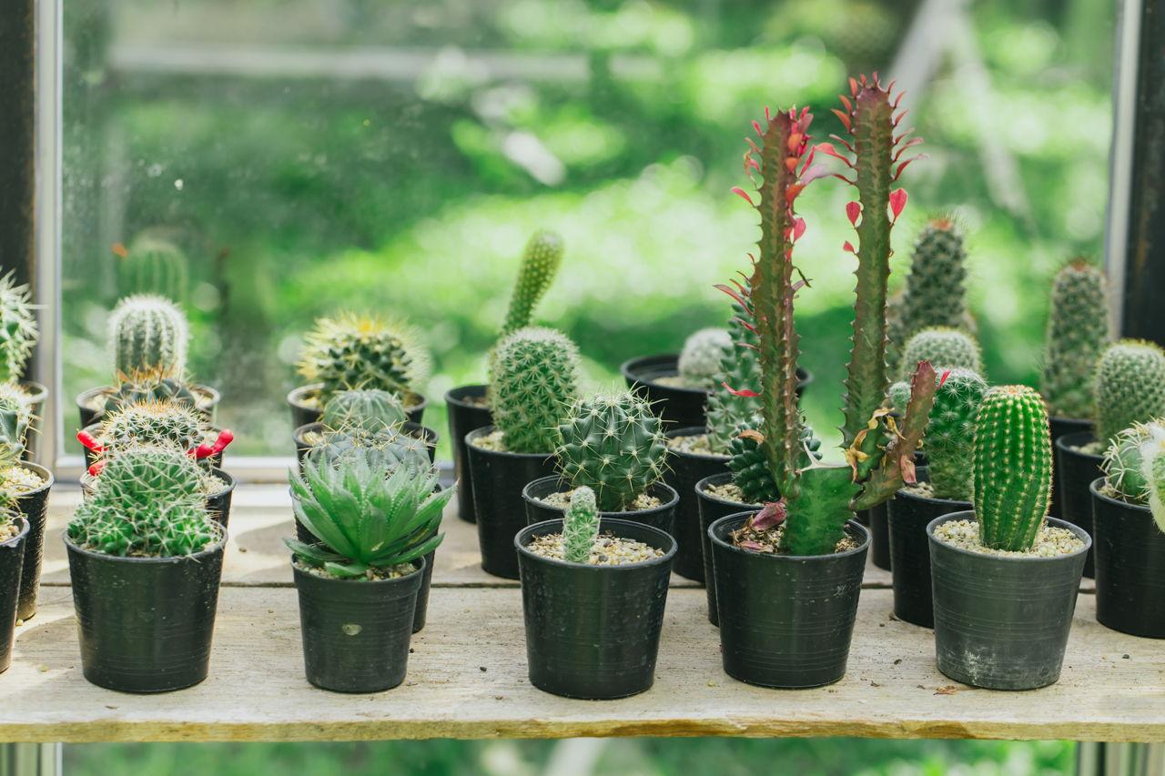 Small Cactus Pot