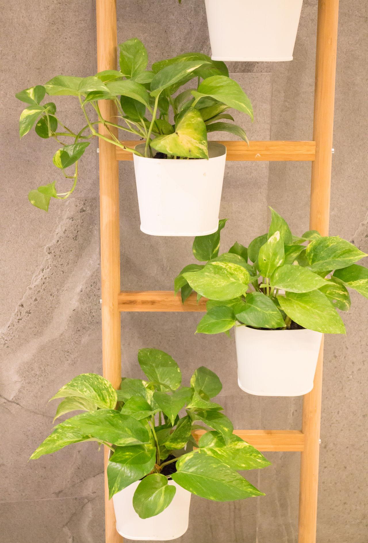 Flowering Plants Vs Non Flowering Plants