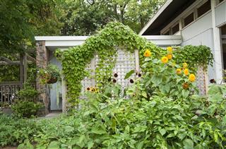 Summer Garden Arbour