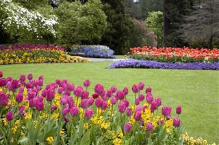 Colorful Garden Landscape