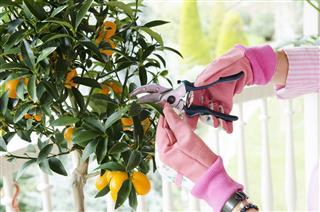 Gardener Cutting Leaf