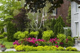 House Front Yard Ornamental Garden