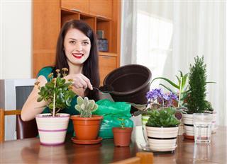 Woman Transplanting Flowers Plant