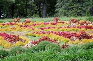 Beautiful Flowerbed