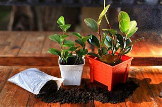 Plants In Orange Pot