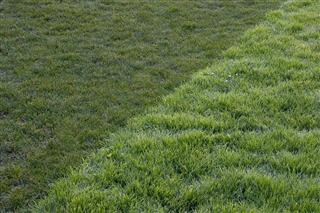 Twotone Grass