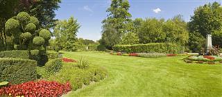 Gorgeous Garden Green Grass