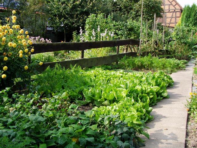 Backyard Garden In Germany