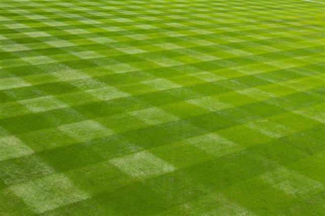 Mown Grass At Ball Field