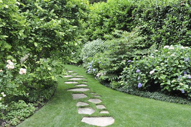 Garden Path In Summer