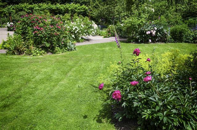 Dahlia And Rose Garden