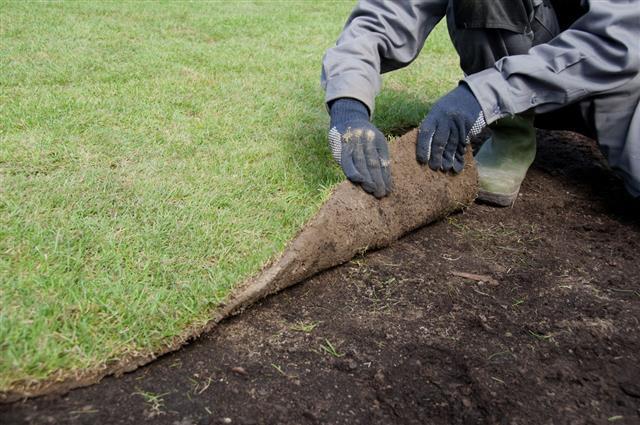 Making A New Lawn