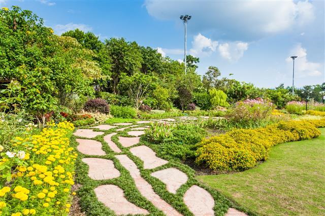 Winding Grass Pathway