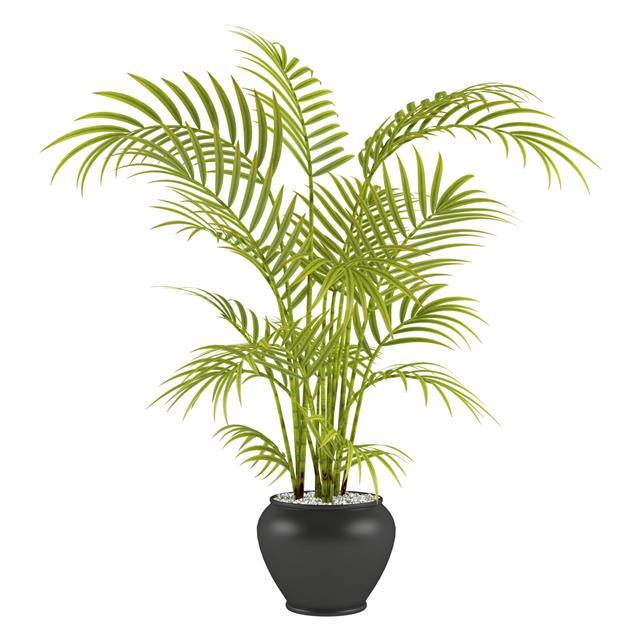 Palm In A Pot