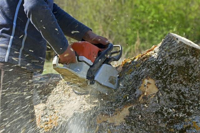 Man Cuts Fallen Tree