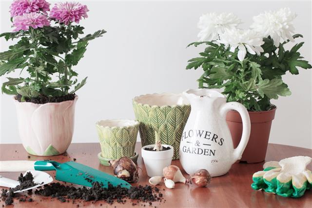 Houseplants In Pot