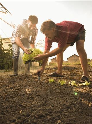 farm workers seeding lettuce
