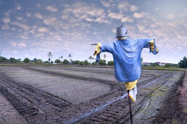Blue Scarecrow