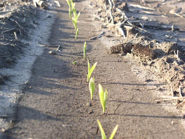 plants emerging