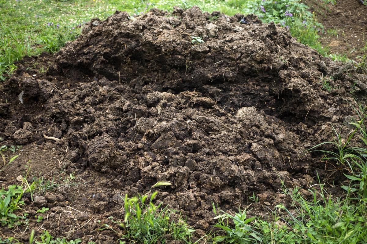Best Fertilizers for Grass