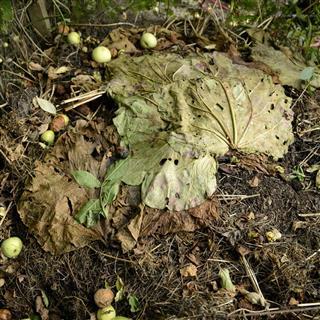 Compost closeup